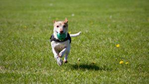 hund_udstyr_leg