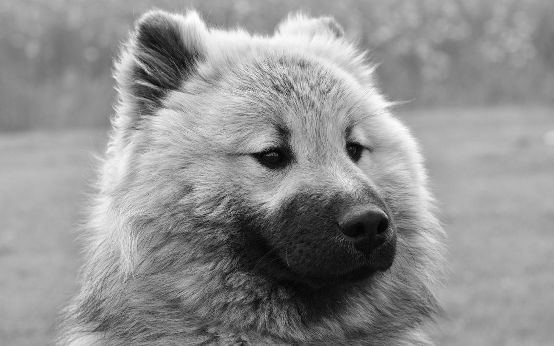 Spar penge når du køber hundeudstyr online